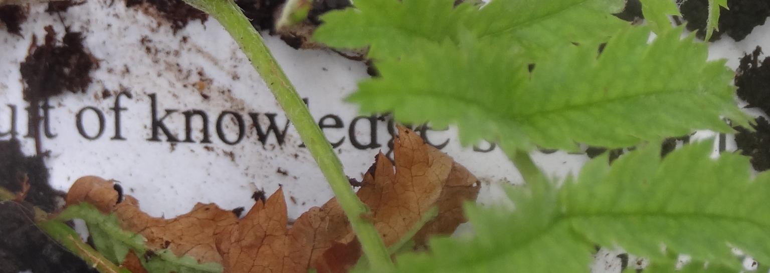 Plant growing out of text